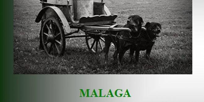 XVII Concurso Monográfico Andalucía